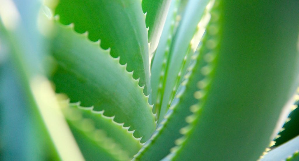 Dr. Organic Aloe Vera - thebeautycorner (4)